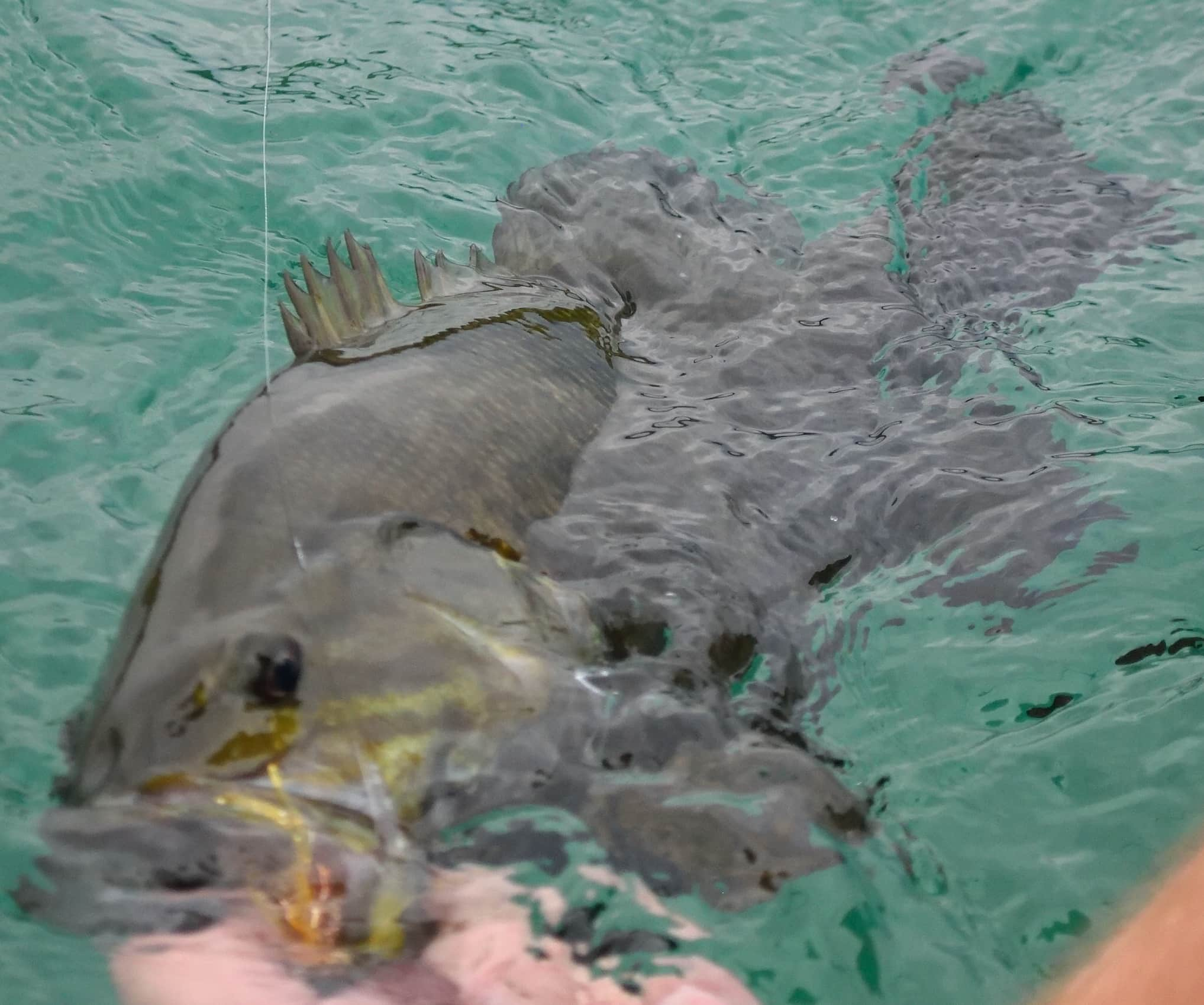 Brookdog Fishing Report – 20160725-20160803