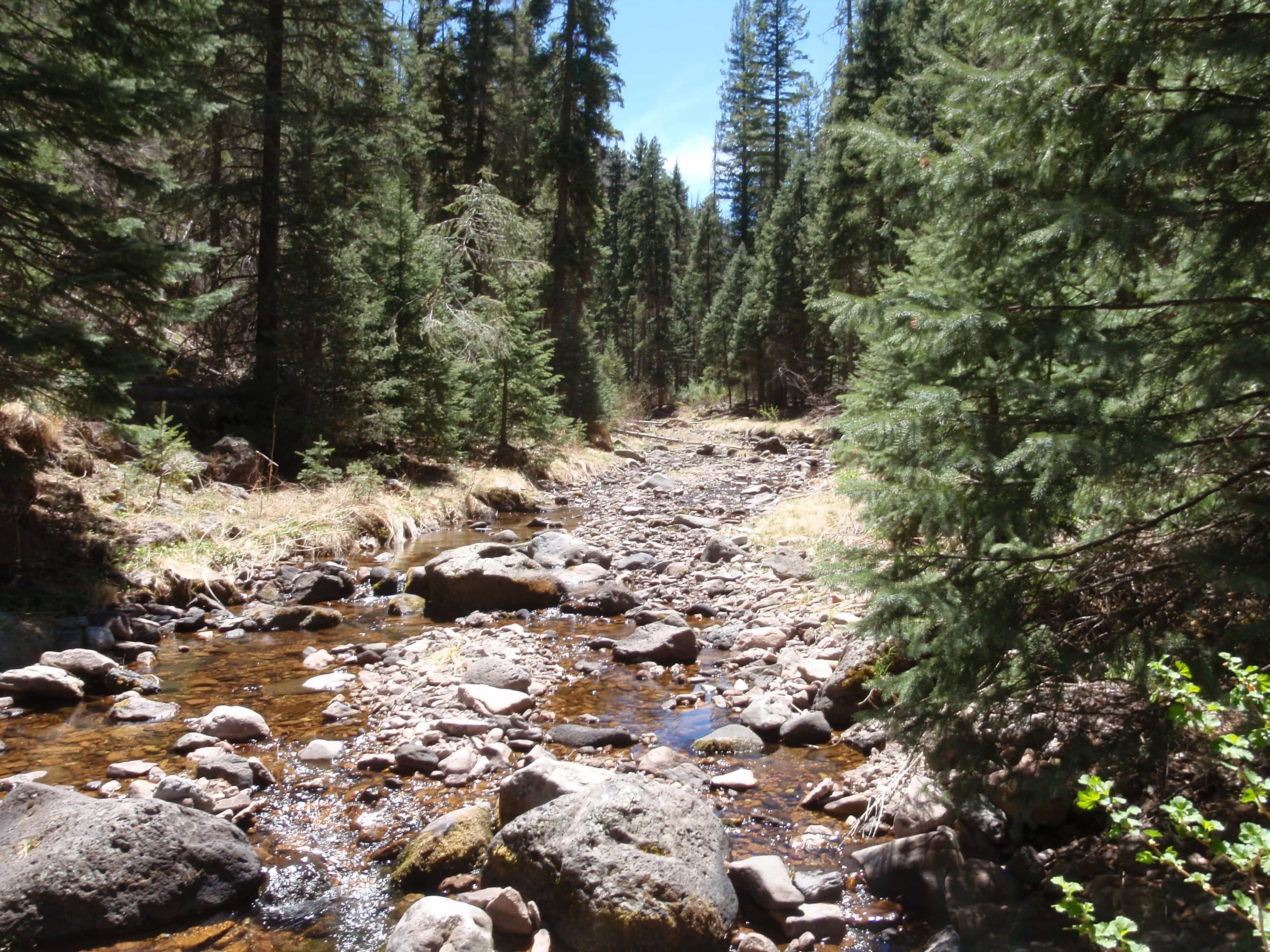 A boney creek in Gila National Forest Found on the Hunt for Gila Trout