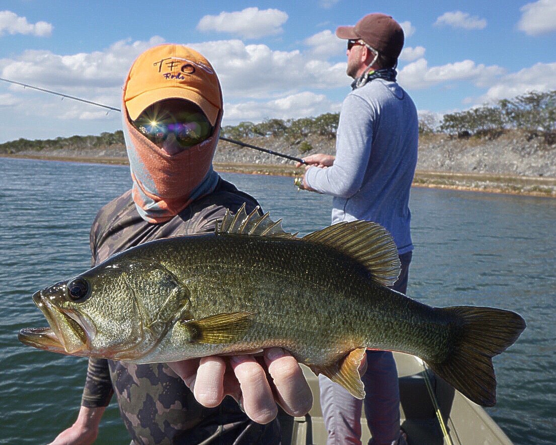 Largemouth Bass on the Frog